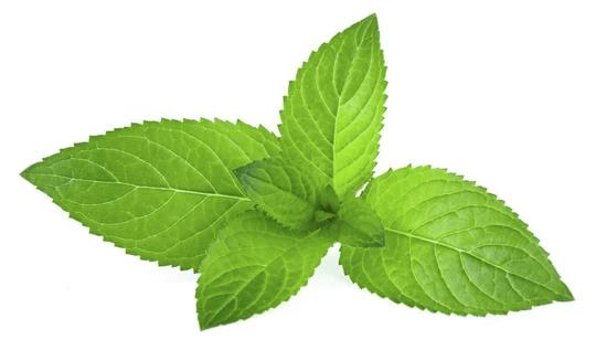 Mint OS